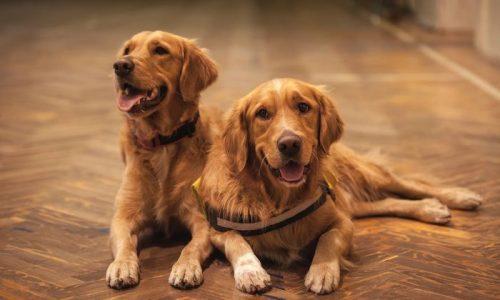 pisos para casa com cachorros